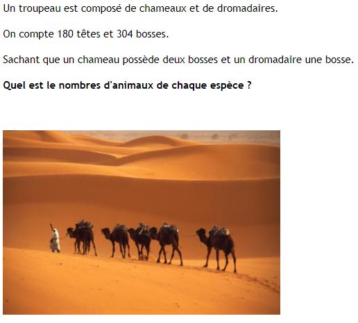 Chameaux et dromadaires : exercices en 4ème.