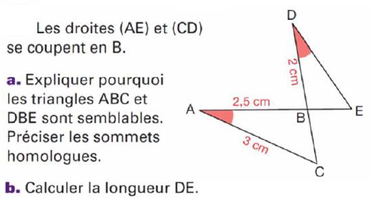 Les sommets homologues : exercices en 4ème.