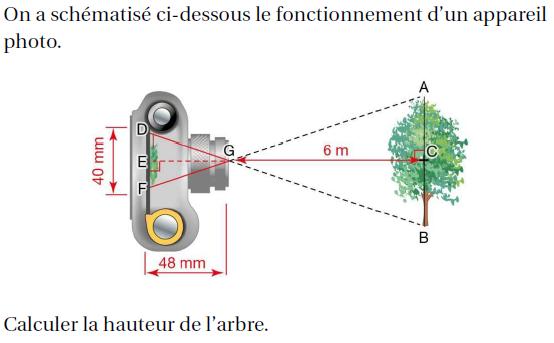 Déterminer la hauteur d'un arbre : exercices en 4ème.