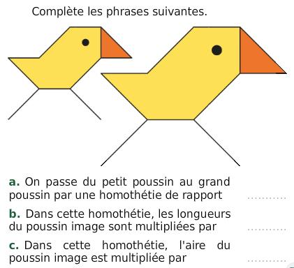 Poussin et homothétie : exercices en 3ème.