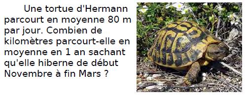 Problème de la tortue : exercices en CM2.